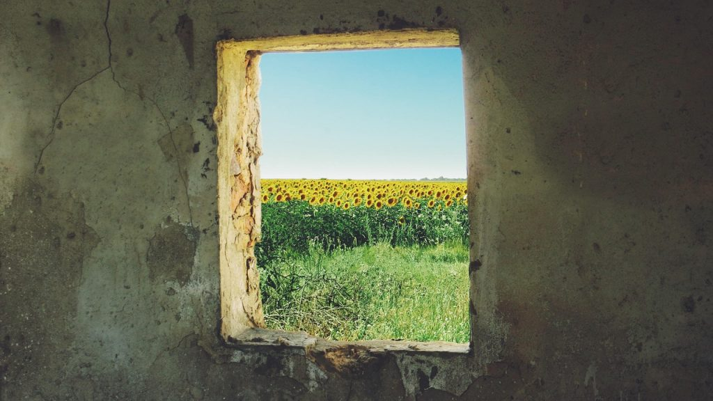 sunflower, window, grunge
